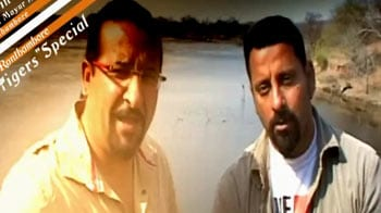 Video : Save our Tigers campaign: Rocky & Mayur in Ranthambore