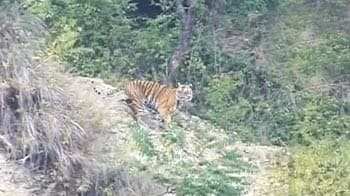 Video : How well-protected are our tiger reserves?