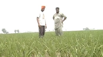Video : With 68 per cent below normal rainfall, Punjab on the verge of drought