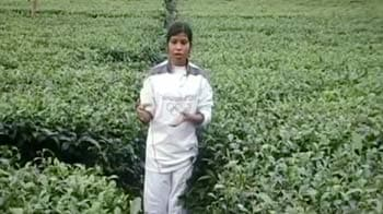 Video : From tea garden in Assam to London Olympics