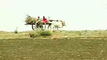 Video : NDTV ground report from drought-hit Satara