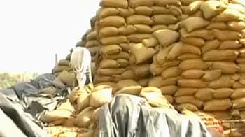 Video : Foodgrain worth Rs. 250 cr rot in Maharashtra godown, state blames Centre