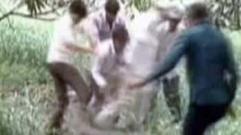 Videos : जूनागढ़ में मगरमच्छ ने युवक को घायल किया