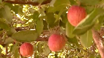 Video : The Himachali apple - changing trends