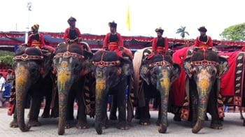 Video : Celebrating Dussehra in Mysore with Arjuna the elephant