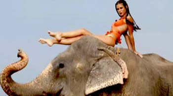 Video : Hunt For The Kingfisher Calendar Girl 2013: Who charmed the elephant