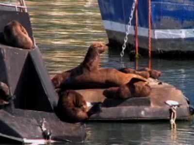 Video : Born Wild: ballet dance of the seals