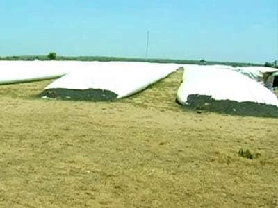 Video : अनाज की बरबादी को रोकेगा 'सिलो बैग'