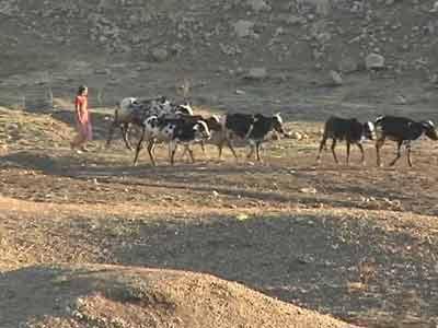Video : Drought in Maharashtra: natural calamity or self-made?