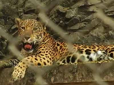 Video : Born Wild: The zoo story (Aired: August 2004)