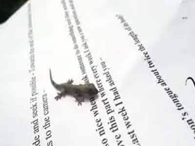 Video : Pet Diaries: Meet an adorable little baby lizard