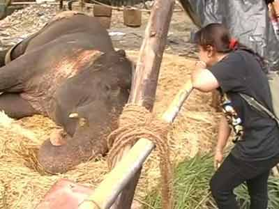 Video : Mumbai fights for Bijlee, age 58, weight five tonnes