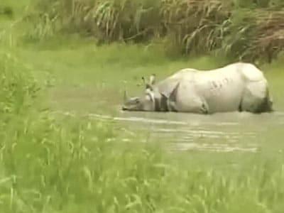 Video : Assam floods: evacuation alert sounded, Kaziranga partially flooded