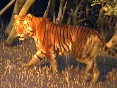 Video : Born Wild: The delta and the desert (Aired: September 2004)