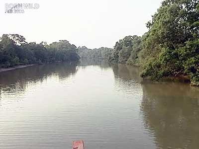 Video : Born Wild: Preserving Odisha's Bhitarkanika Mangroves (Aired: February 2006)
