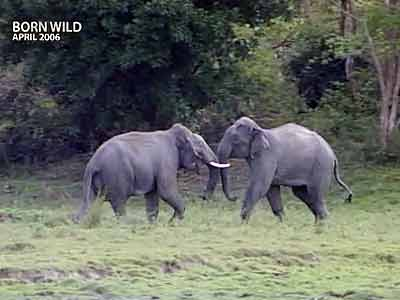 Video : Born Wild: All creatures great and small (Aired: April 2006)