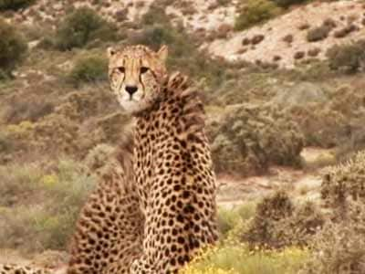 Video : Born Wild: The Sanbona Wildlife Reserve (Aired: March 2008)