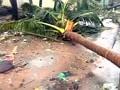 Video : तूफान 'ठाणे' ने अब तक ली 42 की जान