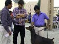 Video: Cute doggies give Keith company in Hyderabad