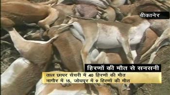 Videos : राजस्थान में बारिश से 40 हिरण मरे