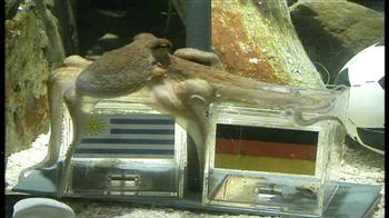 Paul the octopus picks Germany for 3rd place