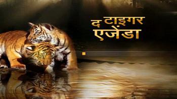 Videos : चिड़ियाघर में दो नन्हे बाघ
