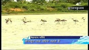 Video : पानी की तलाश में प्रवासी पक्षी