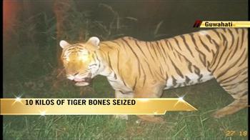 Video : 10 kg of tiger bones seized from Guwahati