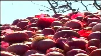 Video : Onion at Rs 60-70/kg; govt suspends exports