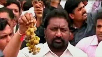 Video : किसानों ने बिखेरे सड़कों पर अंगूर
