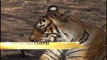 Video : Save the Tiger: Be a tourist conservationist