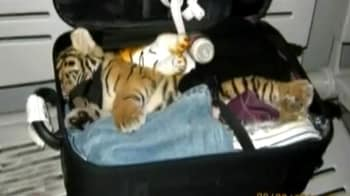 Video : Tiger cub found in suitcase at Thai Airport