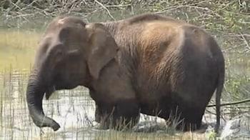 Video : Man vs elephant: Conflict over habitat