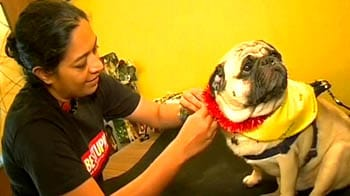 Video : Pamper your pooches this festive season