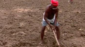 Video : Another crop failure in Tamil Nadu; farmers desperate
