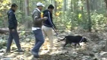 Video : Hunt on for Corbett's wounded tigress