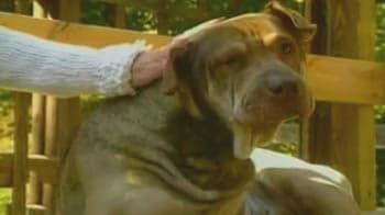Video : Pet dog survives two shots in the head