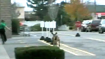 Video : Panicked deer smash through shop window