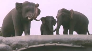 Video : India Matters: Man-elephant conflict