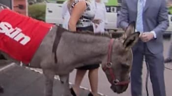 Video : Donkey forced to parasail arrives in Moscow