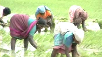 Video : Tamil Nadu: Paddy cultivation in troubled waters
