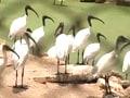 Video : Nandankanan zoo turns 50