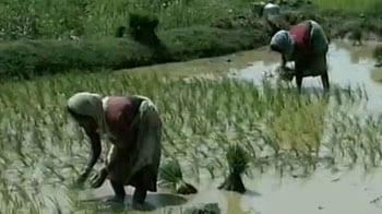 Video : Will India adopt China's rice-farm model?