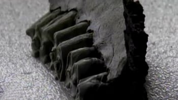 Video : Bones that are 43,000 years old discovered