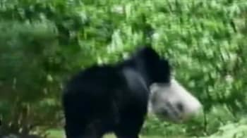 Video : This bear wants your trash!