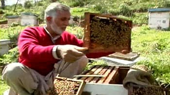 Video : Bees in trouble