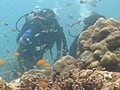 Video: On a trip to the Andamans