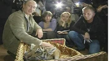 Video : St Petersburg declaration for the tiger