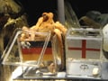 Paul the octopus dies