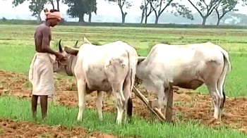 Video : Tracking the monsoon: What's in store for Orissa's farmers?